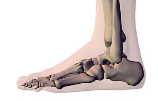 Foot x ray skeleton