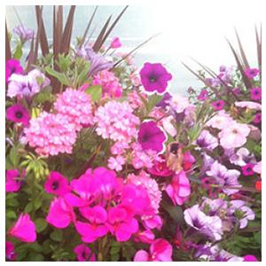 Spring Annuals