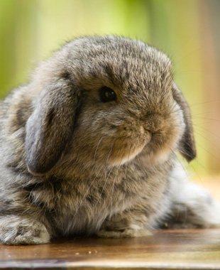 Cute rabbit in focus