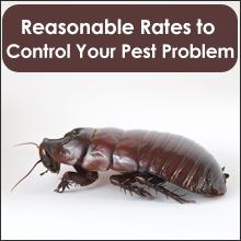 Exterminator Services - Qulin, MO - Baker's Termite & Pest Control