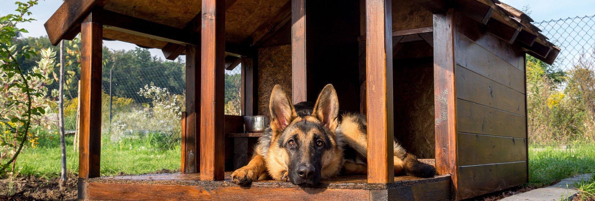 Dog Daycare Everett | Cat & Dog Boarding Kennel & Dog Park