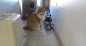 Cat Boarding Kennel
