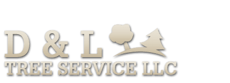 Tree removal | Scotia, NY | D & L Tree Service LLC | 518-399-1006