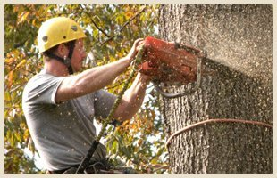 Complete cleanups | Scotia, NY | D & L Tree Service LLC | 518-399-1006