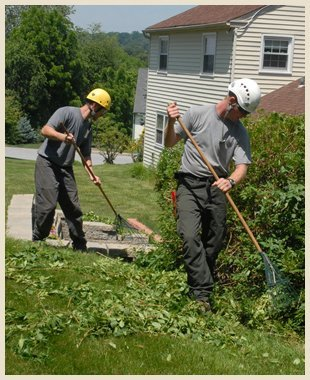 Pruning and shaping | Scotia, NY | D & L Tree Service LLC | 518-399-1006
