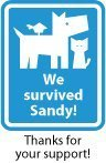 We Survived Sandy