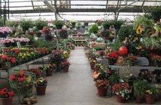 Reit's Garden store