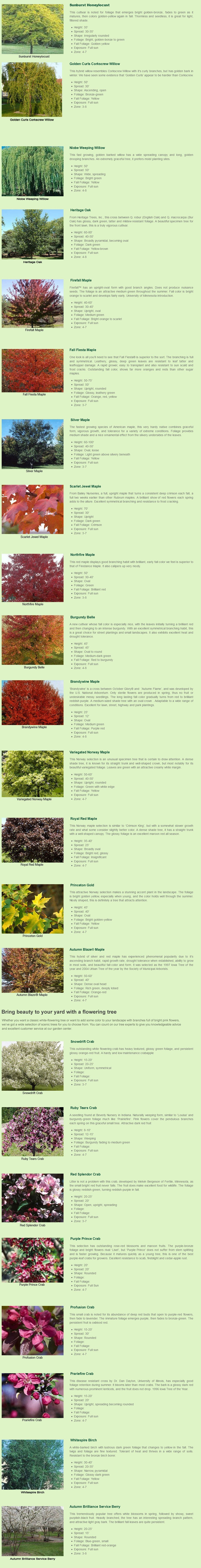 Shade trees | Stanley, WI | Reit's Garden Center | 715-644-2303