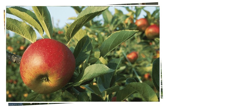 Fruit trees | Stanley, WI | Reit's Garden Center | 715-644-2303