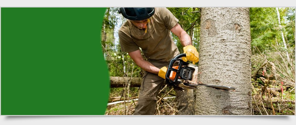 Tree service | Newburgh, NY | 4 Seasons Tree Service | 845-565-8600