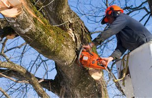 Commercial Tree Service | Newburgh, NY | 4 Seasons Tree Service | 845-565-8600
