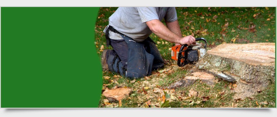 Residential Tree Service | Newburgh, NY | 4 Seasons Tree Service | 845-565-8600