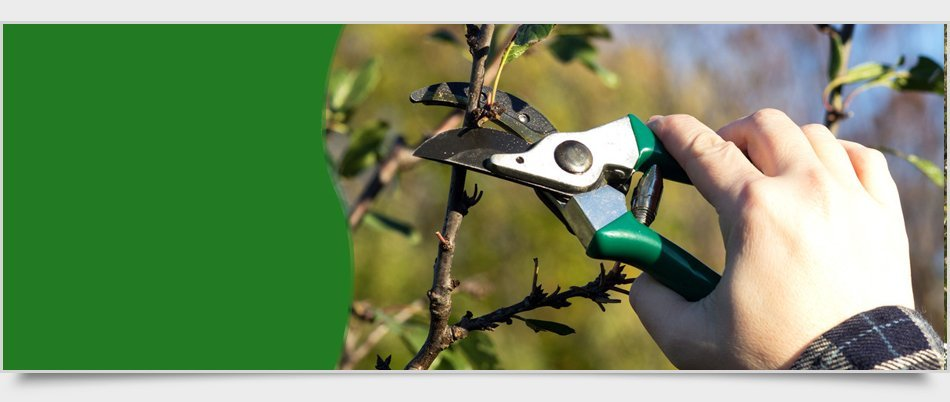 Commercial Tree Service | Newburgh, NY | 4 Seasons Tree Service & Landscaping | 845-565-8600