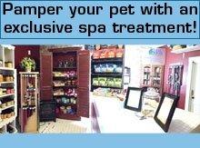 Pet Boarding - Terre Haute, IN - Angel's Pet Grooming & Bed And Breakfast