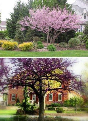 Tree outside the house