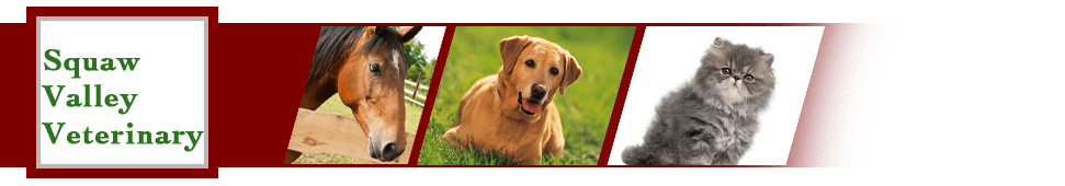Diagnostic Services | Glen Rose, TX | Squaw Valley Veterinary | 254-897-7141