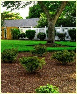 Planting | Keswick, VA | Timberland Associates | 434-962-1662