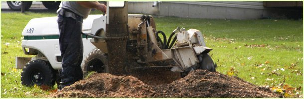 Stump Grinding | Keswick, VA | Timberland Associates | 434-962-1662