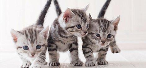 FAQ | Menomonie, WI | Brakken Veterinary Clinic Inc. | 715-235-8404