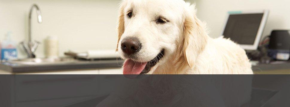 Veterinary Surgery   Menomonie, WI   Brakken Veterinary Clinic Inc.   715-235-8404