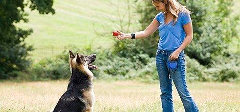 Preventative Veterinary Medicine | Menomonie, WI | Brakken Veterinary Clinic Inc. | 715-235-8404