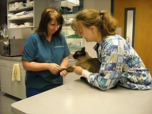 Internal Veterinary Medicine | Menomonie, WI | Brakken Veterinary Clinic Inc. | 715-235-8404