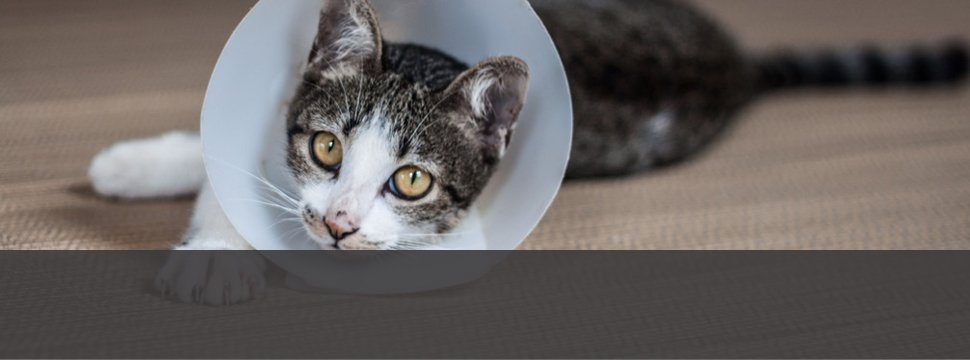 Emergency Veterinary Medicine | Menomonie, WI | Brakken Veterinary Clinic Inc. | 715-235-8404