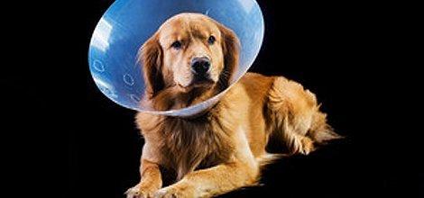 Internal Veterinary Medicine   Menomonie, WI   Brakken Veterinary Clinic Inc.   715-235-8404
