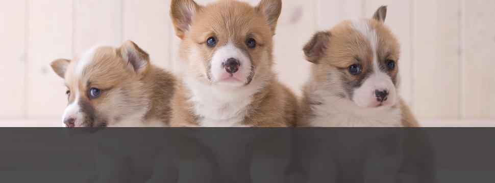 Photo Gallery | Menomonie, WI | Brakken Veterinary Clinic Inc. | 715-235-8404