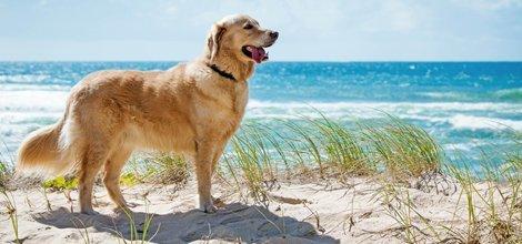 Veterinary Surgery | Menomonie, WI | Brakken Veterinary Clinic Inc. | 715-235-8404