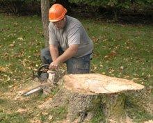 Tree Removal - Cassville, MO - Buck's Tree Service