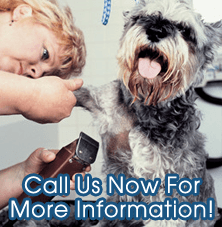 Pet Care - Ackley, IA - Ackley Veterinary Center - Pet Grooming - Call Us Now For More Information!