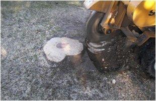 Stump Removal | Landing, NJ | HN Tree Care | 973-347-0391