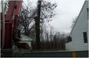 Full Service Tree Care | Landing, NJ | HN Tree Care | 973-347-0391