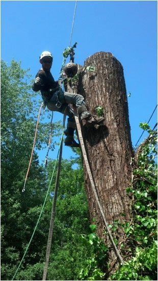 Full Service Tree Care