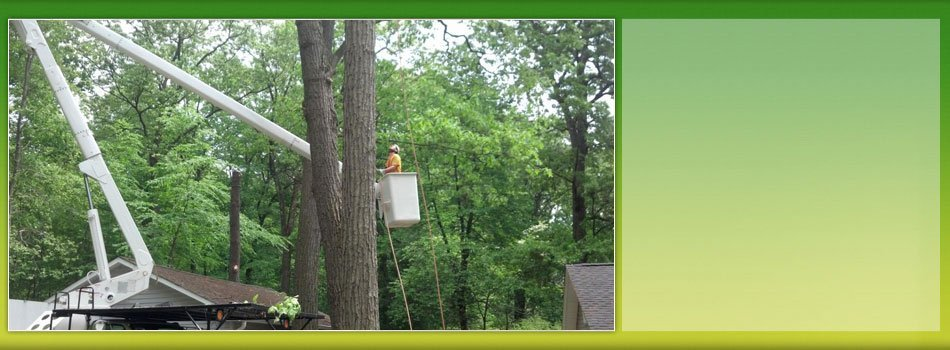 Land Clearing Services | Landing, NJ | HN Tree Care | 973-347-0391