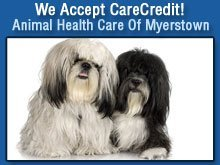 Veterinarian - Myerstown, PA - Animal Health Care Of Myerstown - Dogs - We Accept CareCredit!