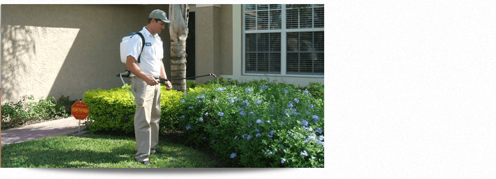 Flying Insect Control | Lake Worth, FL | Alliance Pest Control, Inc. | 561-585-5299