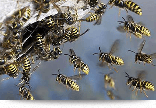 Insecticide for pest control