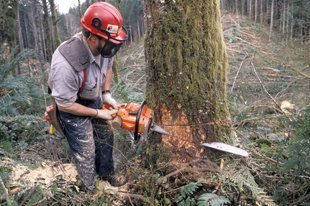 Stump Grinding Services - Middleton, ID - Mountain West Tree LLC
