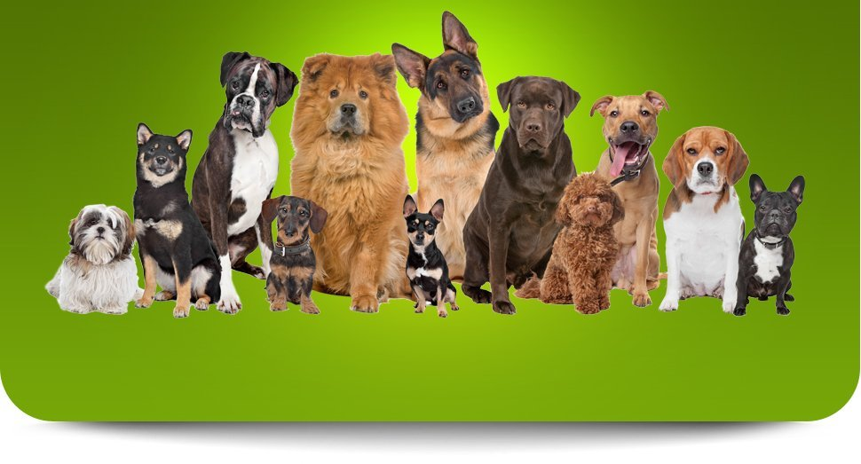 Different kinds of dog
