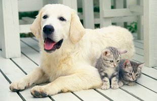 Dog and two kitten