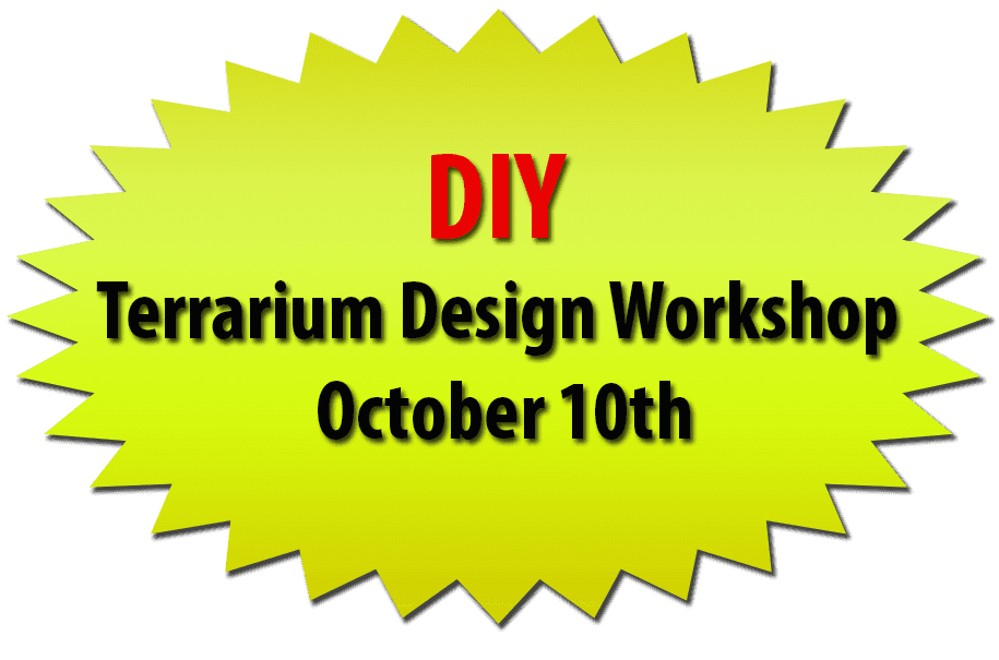 DIY Terrarium Design Workshop