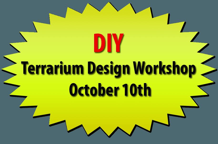 DIY Terrarium Design Workshop