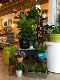 Variety of plants at UrbanDigs