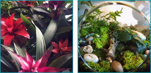 Close-ups of plants