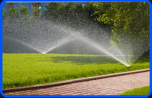 Weed Control | Port Chester, NY | Capocci Landscaping LLC | 914-939-5876