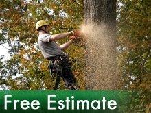 Tree Service - Silvis, IL - Burns Stump Removal & Tree Farm