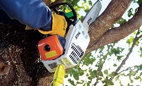 In Tree Saws-Foley MN-Hardware Hank-320-968-7262
