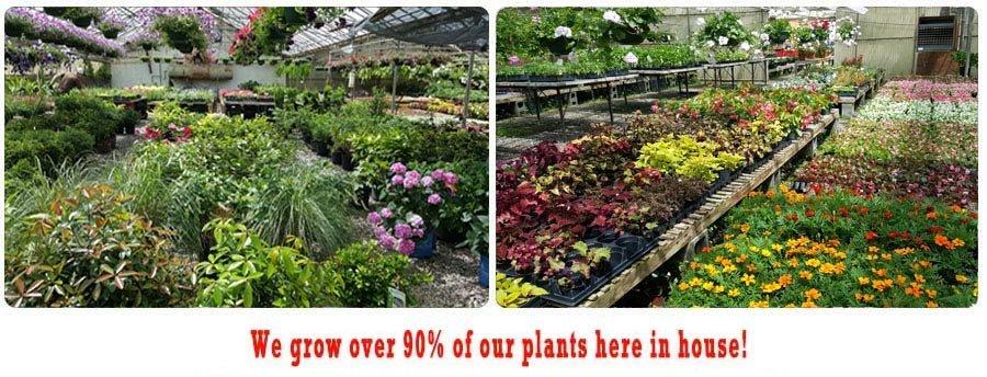Flowers, Plants, and Vegetable Seedlings - Marietta, GA - Kelli Green Garden Center
